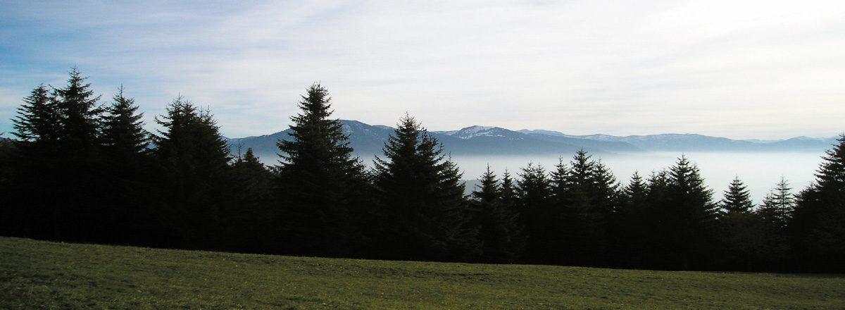Wanderreise in den Bayerischen Wald