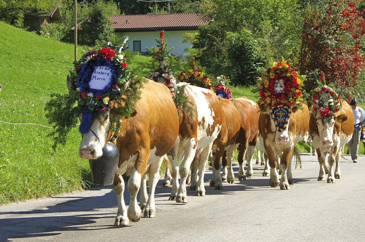 Steiermark Almabtrieb