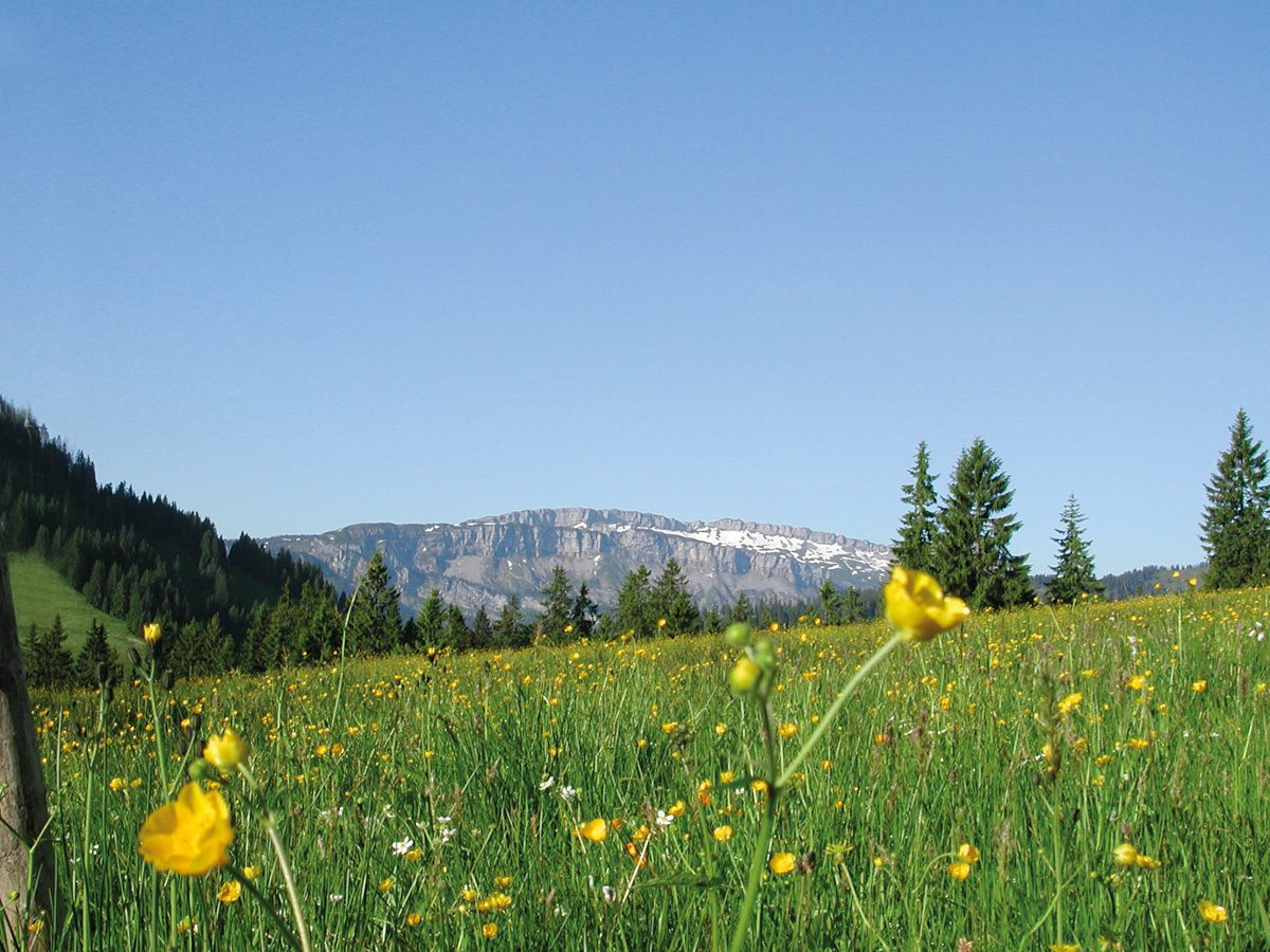 Balderschwanger Land, Blumenwiese